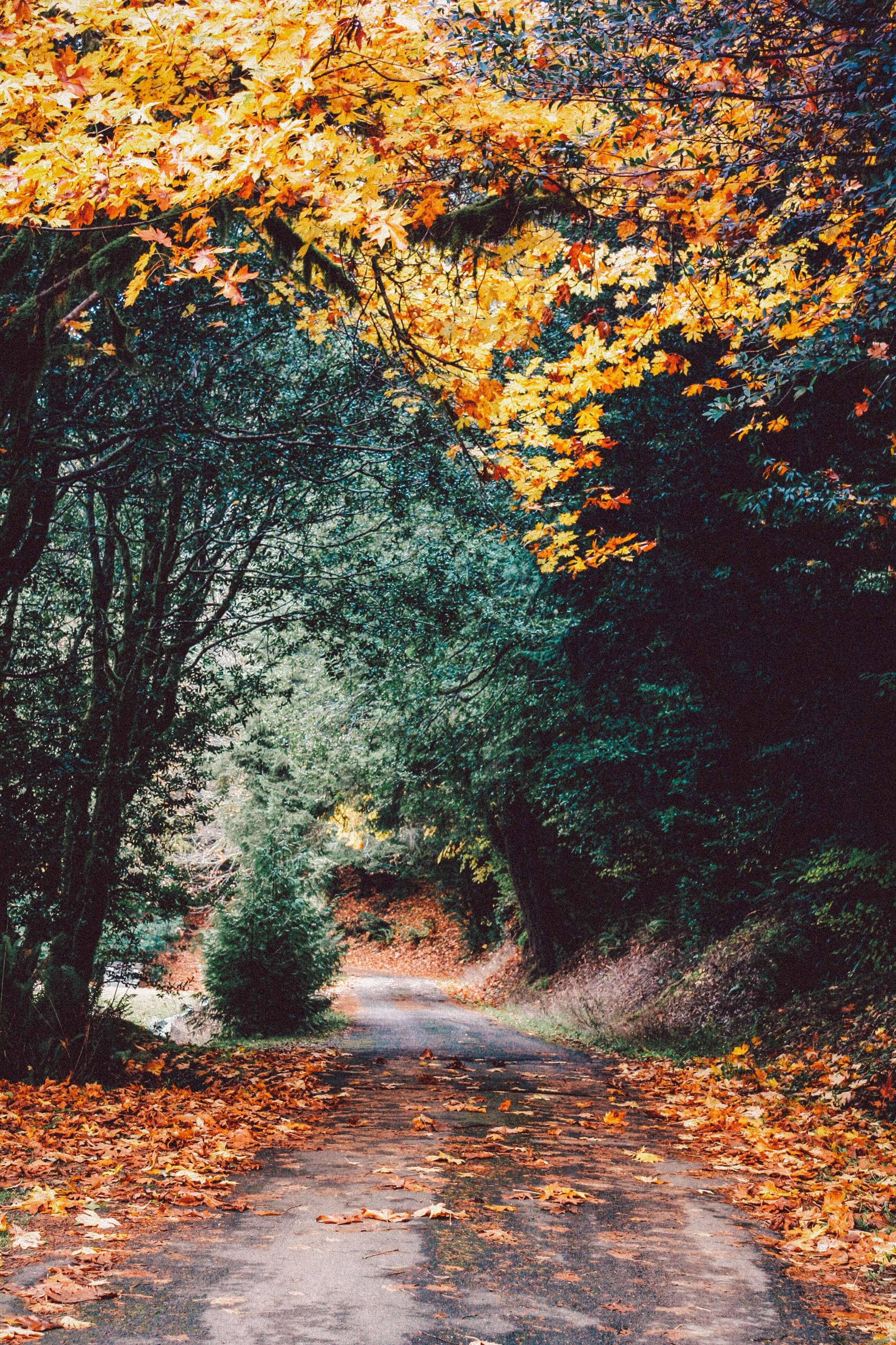 5 leukste vakantieparken om te bezoeken tijdens de herfst